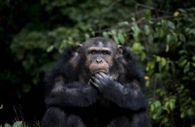 Humans putting 1,700 animal species at greater extinction risk: Study