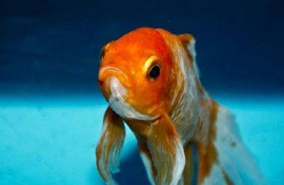 Chinese scientists identify 244-million-year-old new fish genus