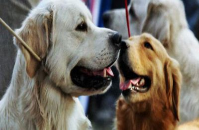Pay Attention! Having pets may lower stress in older adults