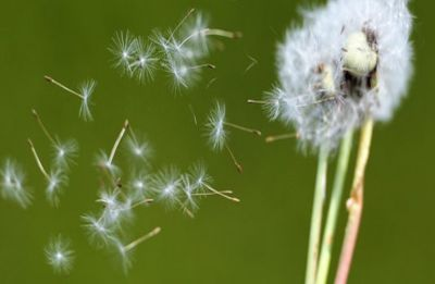 Attention! Pollen in air may help predict asthma, hay fever risk