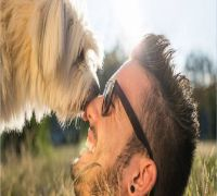 Dogs may sniff out cancer in blood with 97 per cent accuracy and help develop inexpensive screening approaches : Study