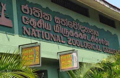 2 dead in fresh blast at hotel near Zoo in Sri Lanka's Dehiwela