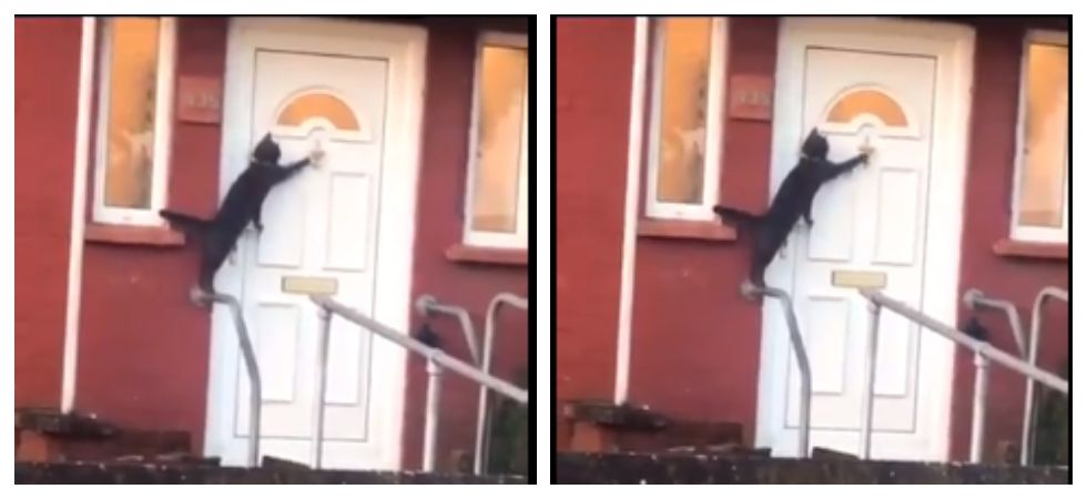 Cat locked out politely knocks on door to let it be in (Photo: Twitter)