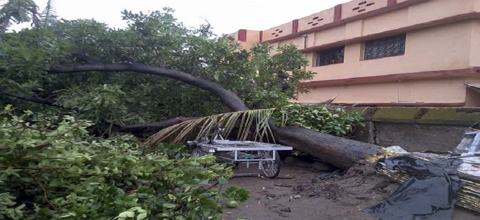 A tree lies uprooted because of the gusty winds in Bankura district of West Bengal. (Photo: PTI)