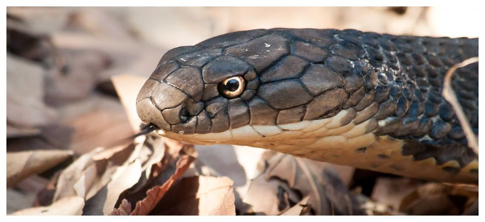 Man bites snake after it bit him, both dies (Photo: Twitter)