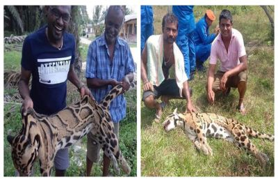 Heartless poachers photographed laughing and smiling with dead body of rare clouded leopard