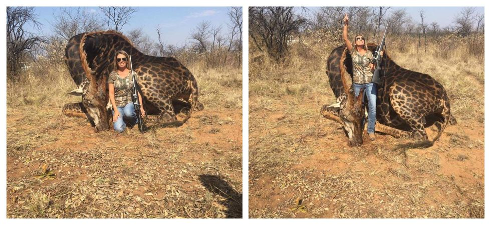 Hunter who posted with rare giraffe speaks up (Photo: Twitter\Africlandpost)