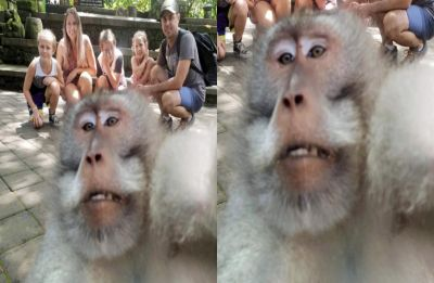 This monkey just photobombed a family picture and it will surely make you go ROFL!