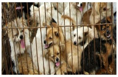1.5 Million people petition to ban China's infamous Yulin Dog Meat festival
