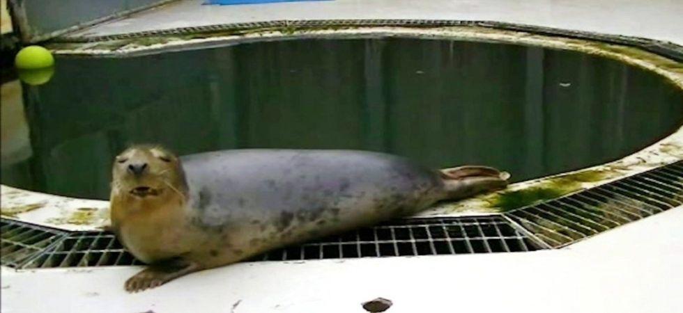 WATCH: Seal sings 'Twinkle, Twinkle, Little Star' (Photo Courtesy: Twitter)