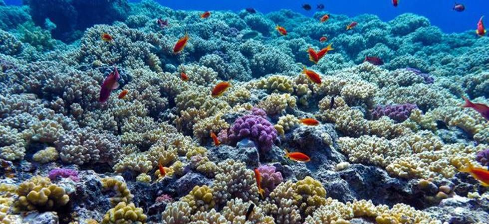 Changes in fish communities were most apparent on these seaweed dominated reefs