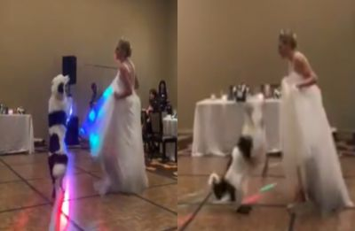 This American bride dances with pet dog on her wedding day, internet is all hearts