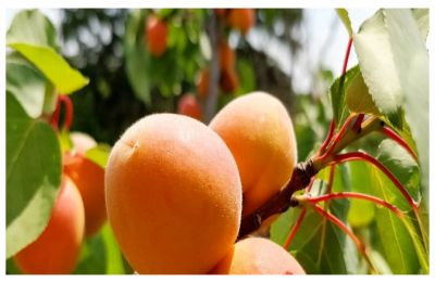 Happiness is the best medicine! Eat THESE fruits to stay happy