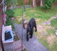 Fearless dog chases bear away from backyard, video goes VIRAL!