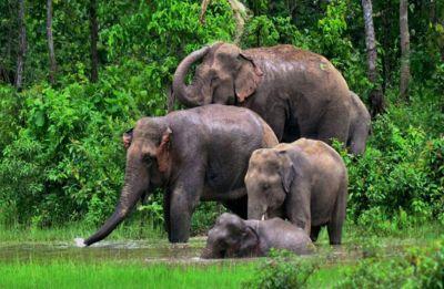 Kerala government to set up Rs 105 crore elephant rehabilitation centre