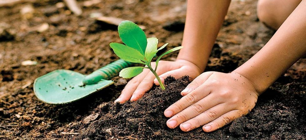 Uttar Pradesh government sets world record by planting over 22 crore saplings in one day (Representational Image)
