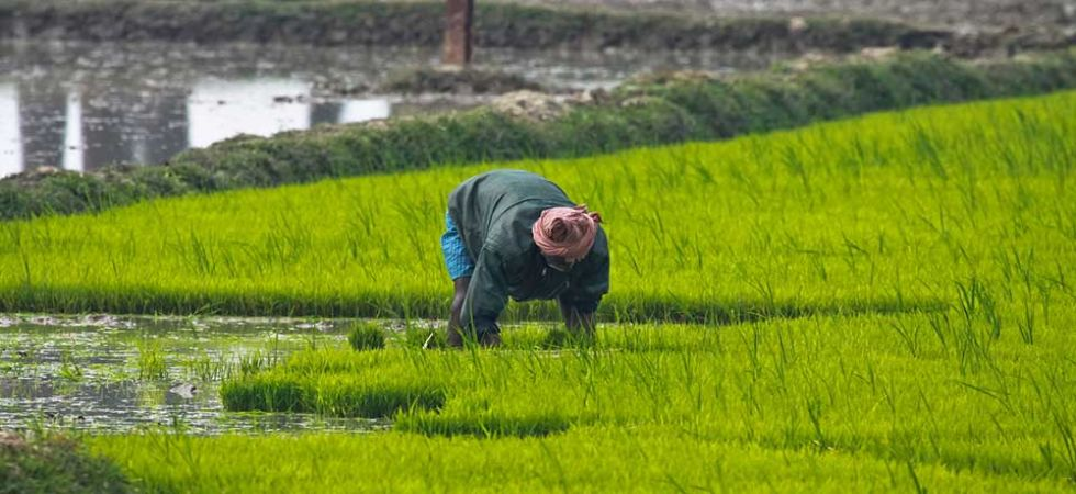A farmer working in the field (File Photo)