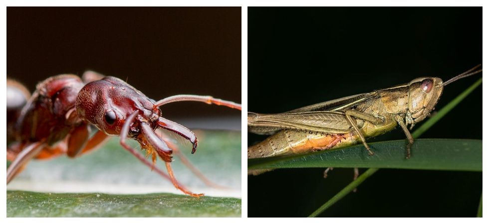 New study finds eating ants, grasshopper could protect you against Cancer (Photo: Instagram)