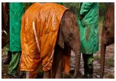 Captive elephants experience stress says study