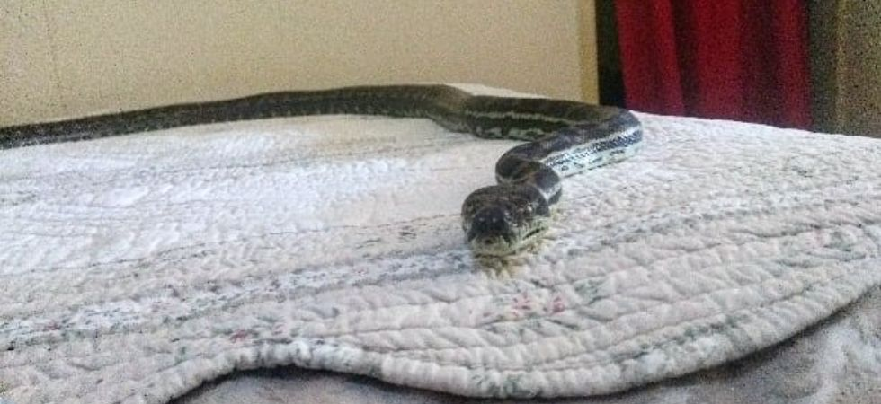 Python falls from ceiling to bed. (Image: Facebook)