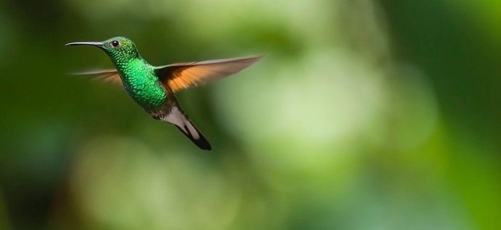 Bird Calls Show Similarity To Human Languages (Photo Credit: Pixabay.com)