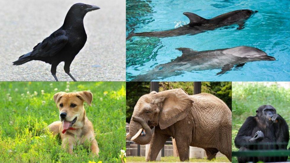 World Animal Day: 5 Most Intelligent Animals Who Never Fail To Amaze Us
