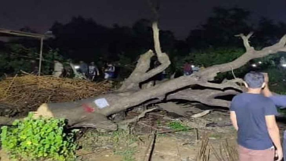 Green activists have been opposing cutting of trees by Mumbai Metro Rail Corporation Ltd (MMRCL).