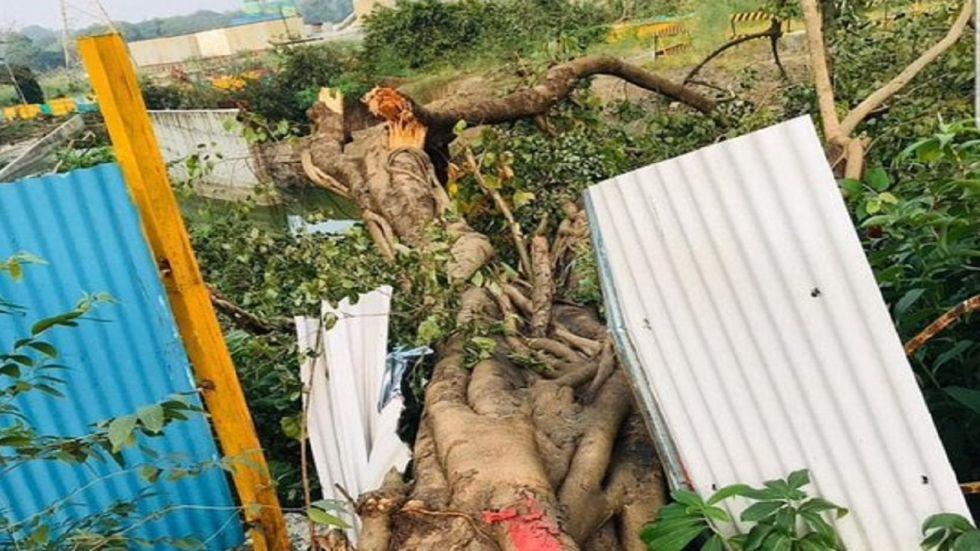 Mumbai Metro has axed 2,141 trees of the area.
