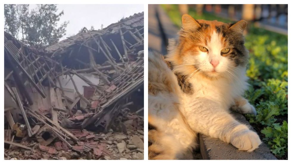 Italian couple saved from landslide by their cats