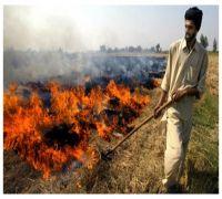 NASA Images Show Drastic Rise Of Crop Burning In Punjab, Haryana: Delhi Government