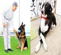 Ratan Tata's Heart-Warming Birth Anniversary Post For His Doggo Is PAWFECT