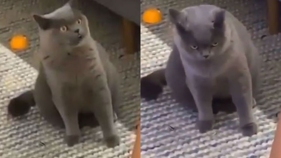 Cat's look of 'surprise, betrayal and hurt' has captured everyone's attention