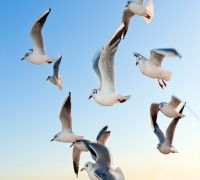Environmental DNA Test May Reveal Where Birds Flock Together, Claims Study