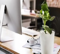 Keeping Plants On Work Desk May Cut Stress In Employees: Study