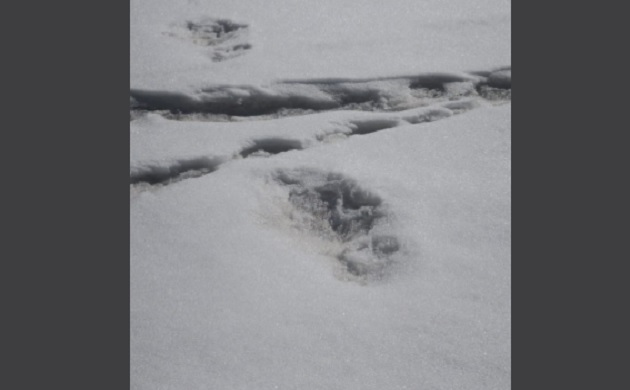 In Pics: Indian Army claims to have spotted Yeti's giant 'footprint' in Himalayas