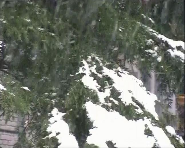 Snowfall begins in Kashmir valley