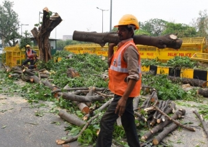 Delhi: Gas chamber city risking more trees