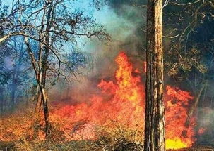 Fire in Mumbai's Aarey forest near Infinity IT Park doused