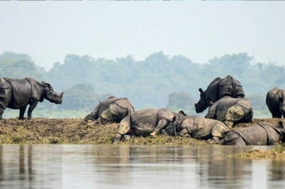 Animals in danger as floods worsen in Kaziranga National Park